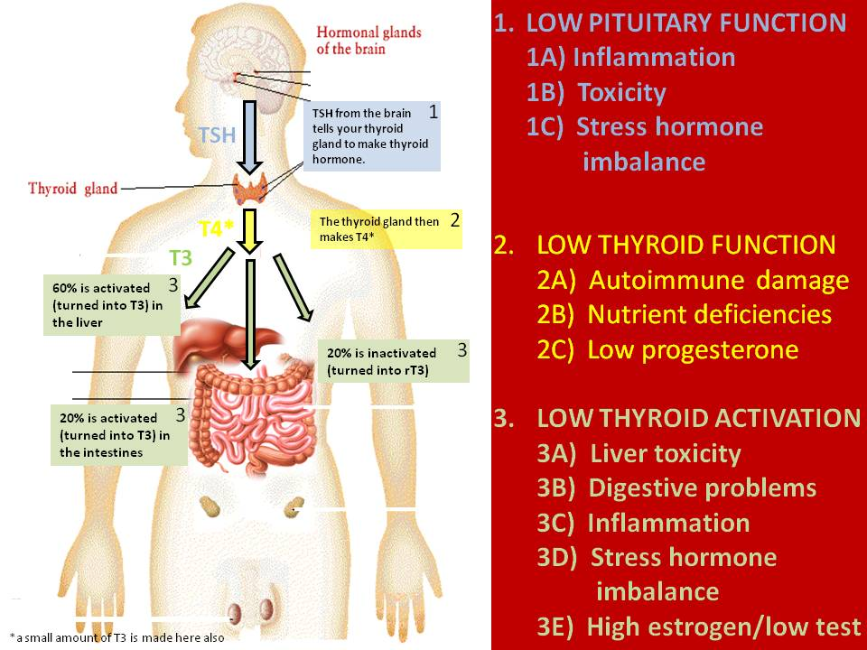 thyroid_function