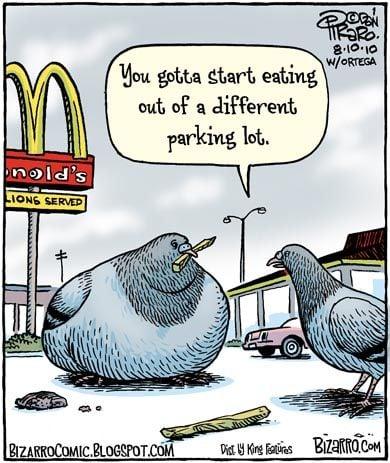 Seagull Comic
