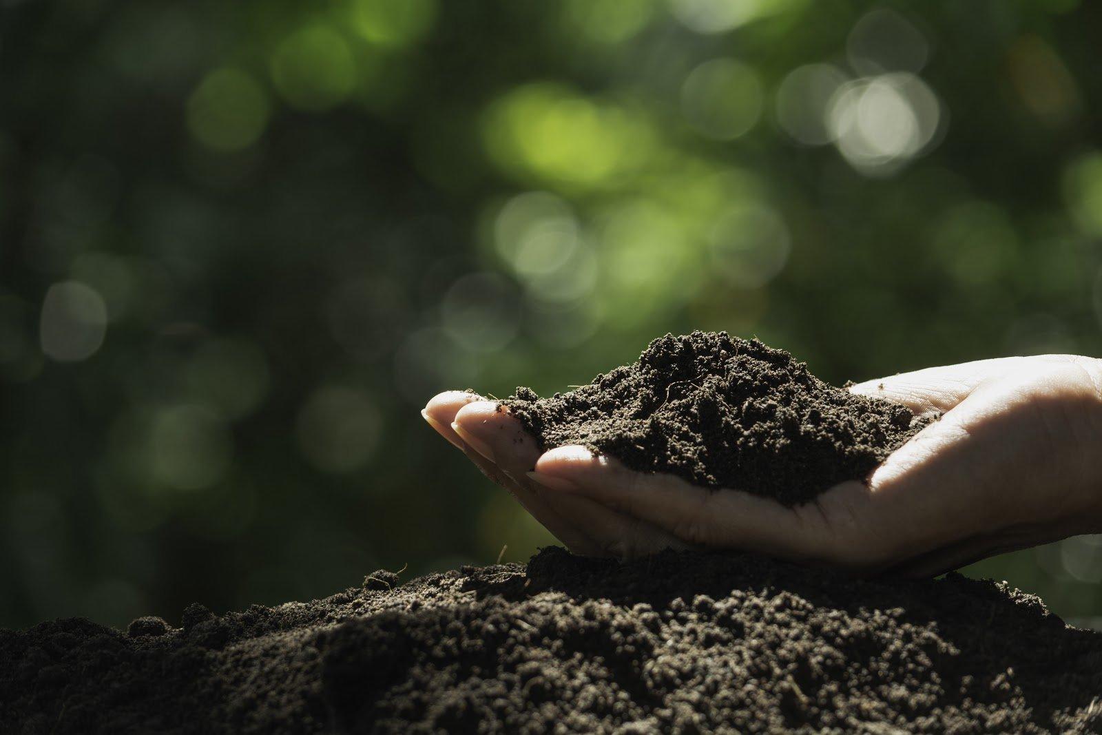 Soil-based probiotics: Hand holding soil