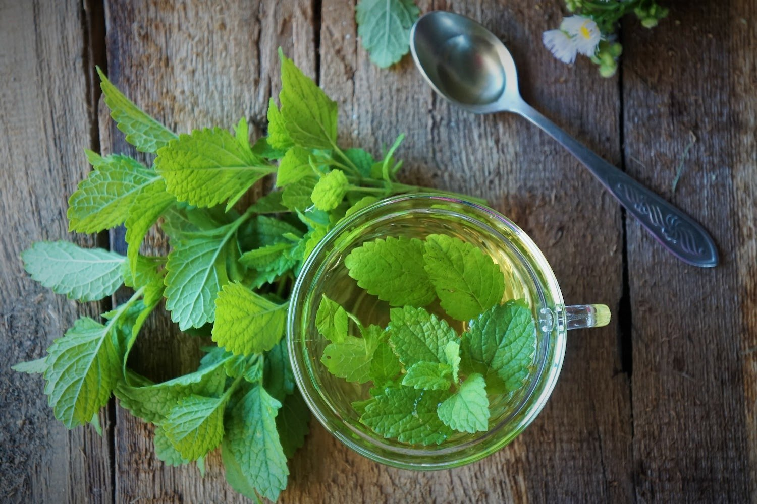 Some herbs act as natural remedies for hyperthyroidism.