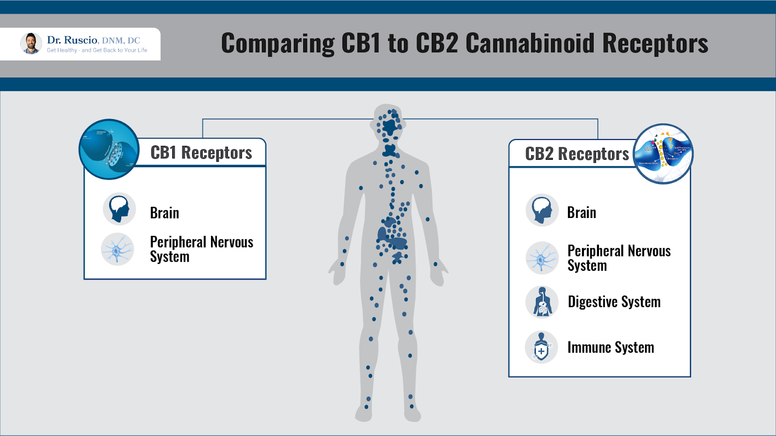 Comparing CB1 to CB2 Cannaboids Receptors