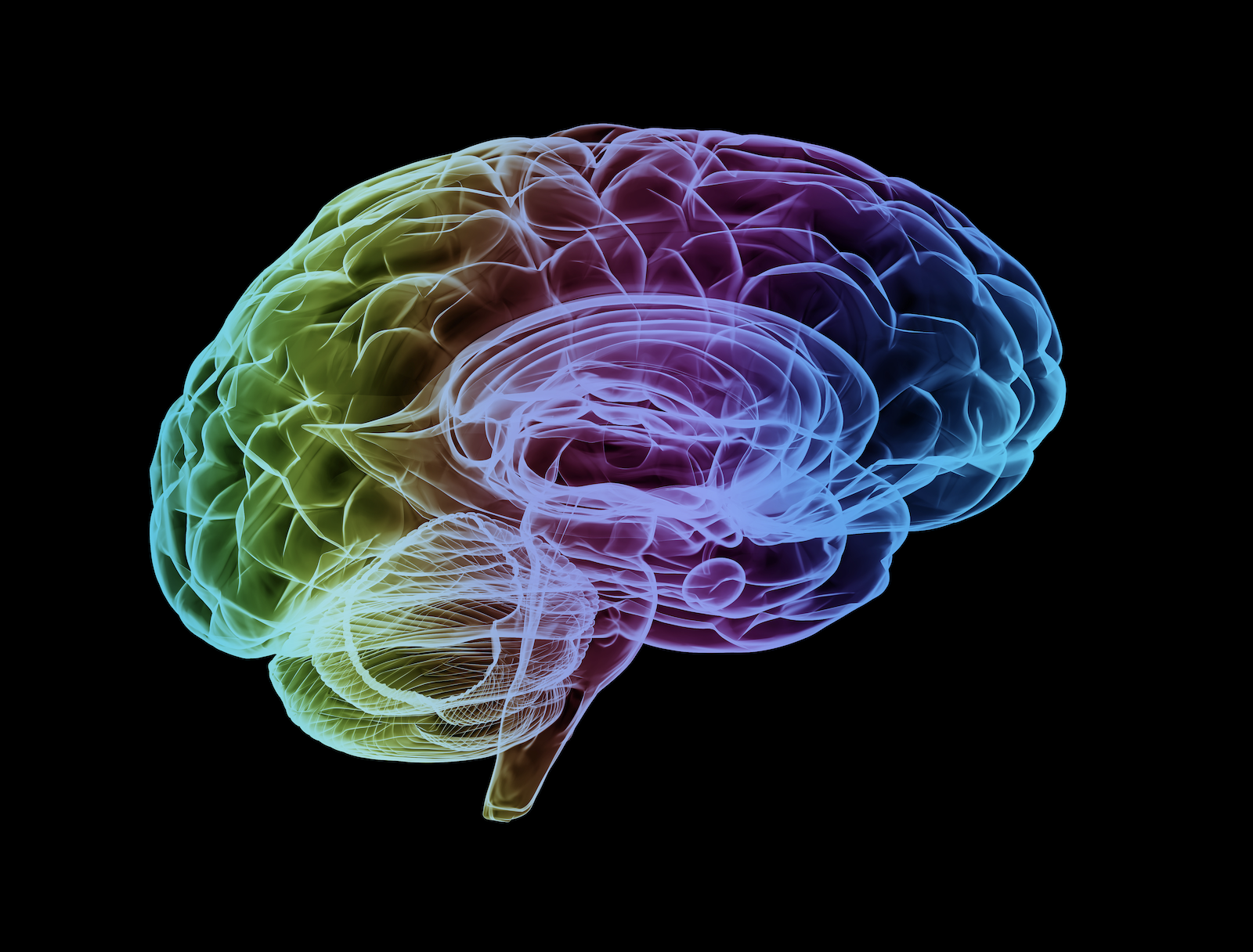 colorful illustration of the brain