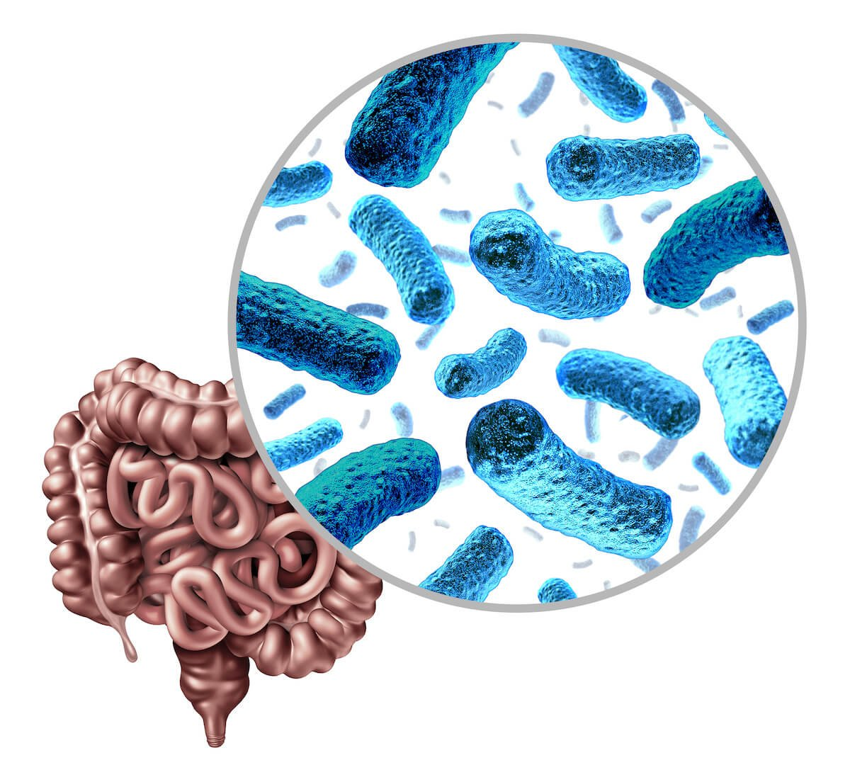 Bacteria and intestines
