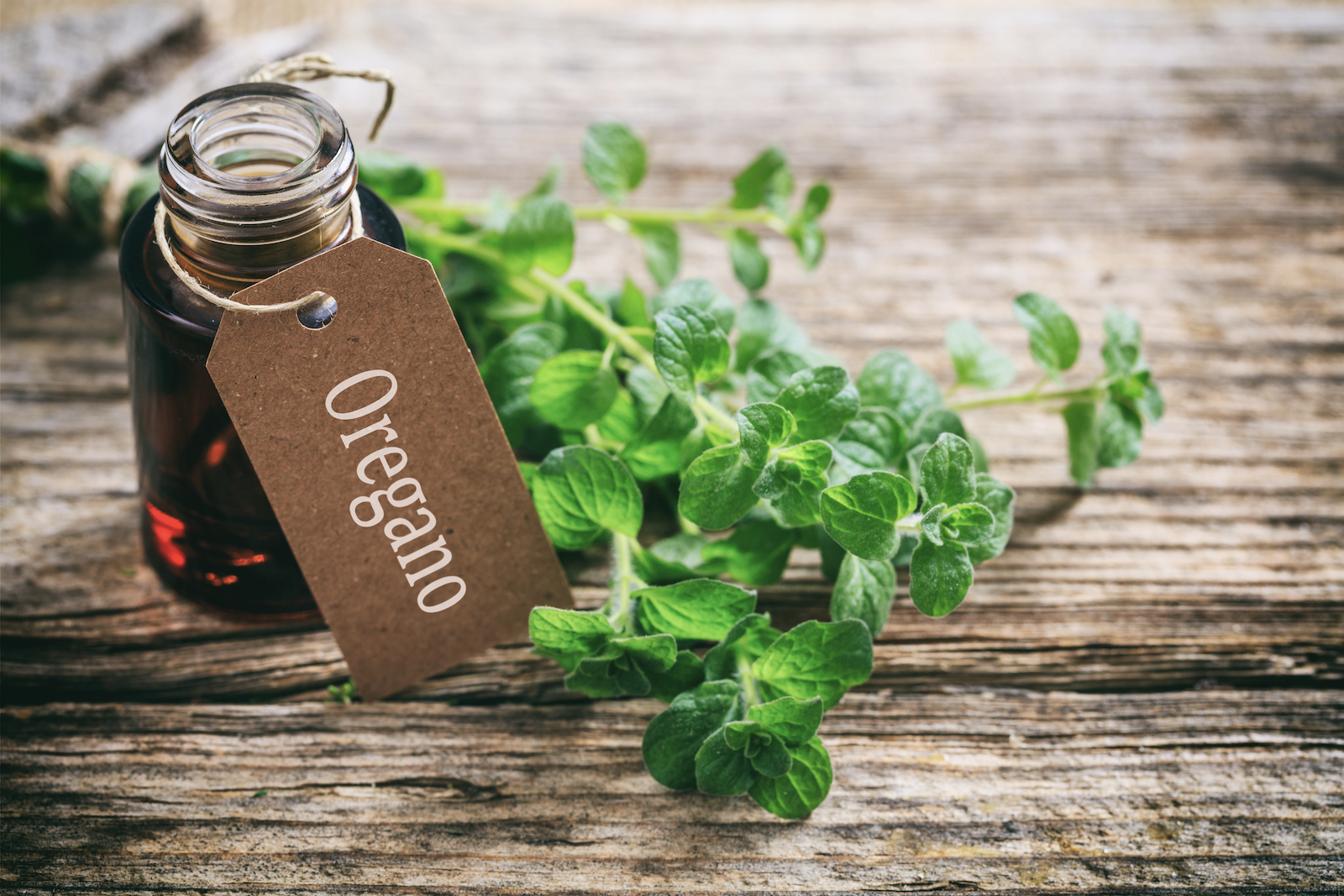 oil of oregano benefits: Bottle of oregano oil and a sprig of fresh oregano on a wooden surface